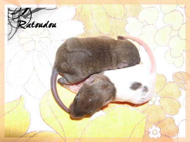[25] Ma petite Lolita est maman ^^ Dscf5270-101a35a