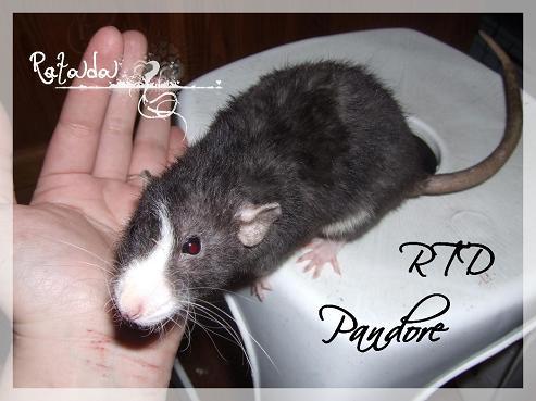 RTD Pandore xXx Spoutnik, les knakis sont nés! Dscf5991-110ab3d