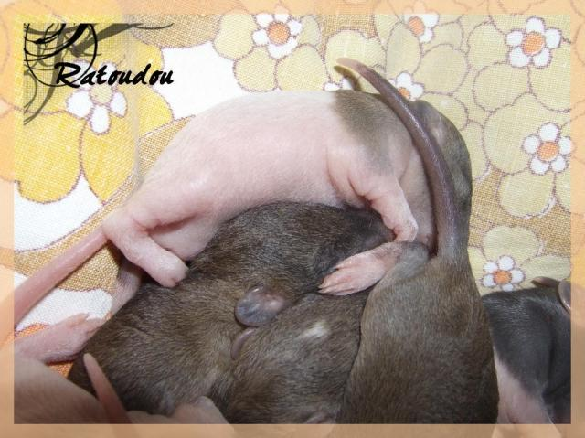 [25] Ma petite Lolita est maman ^^ Dscf5170-1019f23